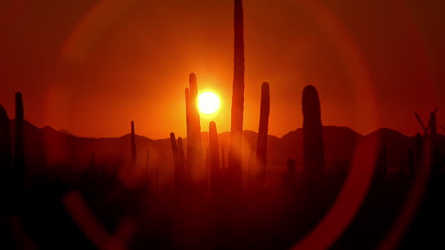 Wide shot sun setting behind silhouetted cacti and mountains in desert / Arizona