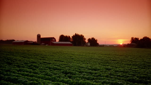 Wide shot sunrise over barn with crops in foreground
