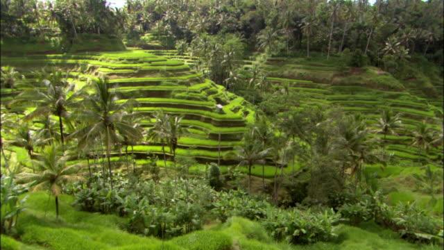 vidéos et rushes de wide shot terraced rice paddy / bali, indonesia - rizière