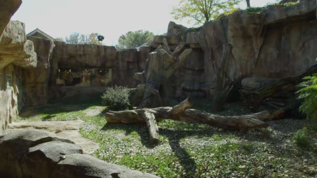 Wide shot through a viewing gallery window in an animal enclosure for monkeys in a zoo cage.