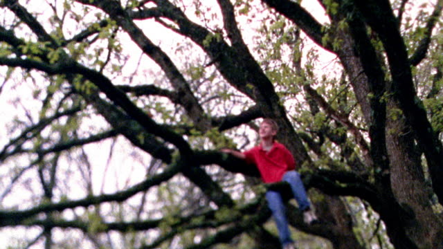wide shot tilt down pan young boy sitting on branch of large tree / missouri - moving up stock videos & royalty-free footage
