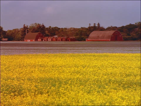 wide shot time lapse cloud shadows over red barns + yellow rape field / brandon, manitoba - kreuzblütengewächse stock-videos und b-roll-filmmaterial