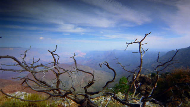 Wide shot time lapse dolly shot over gnarled tree and cliff edge to panoramic view of the Grand Canyon / Arizona