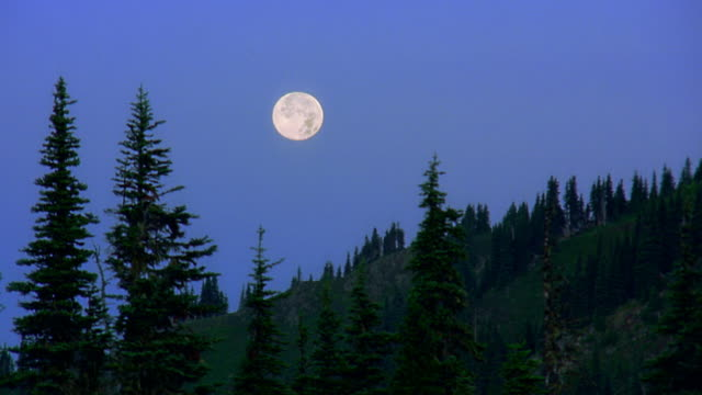 wide shot time lapse moon setting in blue sky over pine tree covered hillside / olympic peninsula, washington - full moon stock videos & royalty-free footage