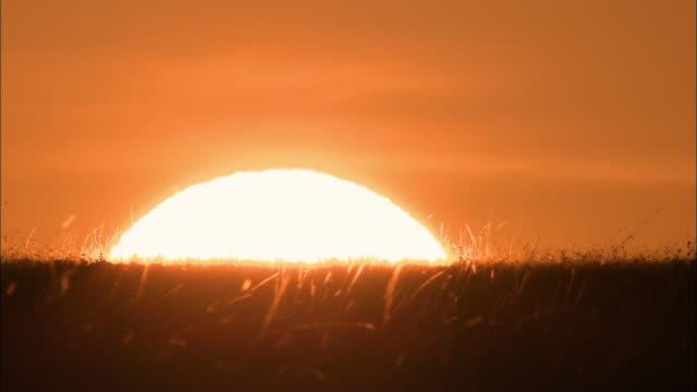 Wide shot time lapse sun rising above grassy field / Masai Mara, Kenya
