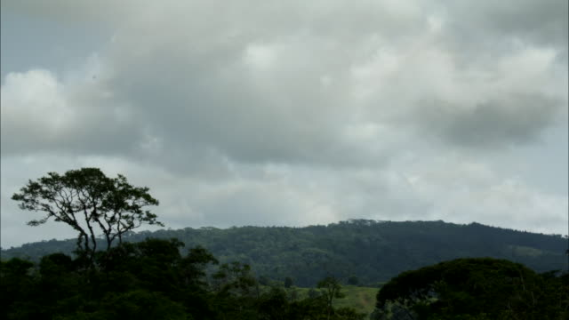 vídeos de stock, filmes e b-roll de wide shot, time lapse; swirling clouds over forest treetops  - árvore tropical
