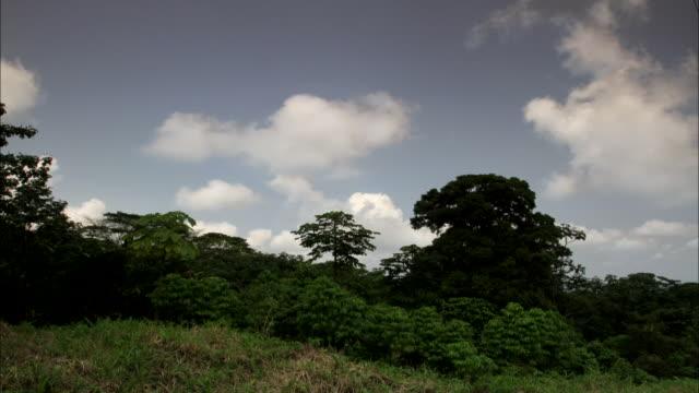 vídeos de stock, filmes e b-roll de wide shot, time lapse; swirling clouds over forest  - árvore tropical