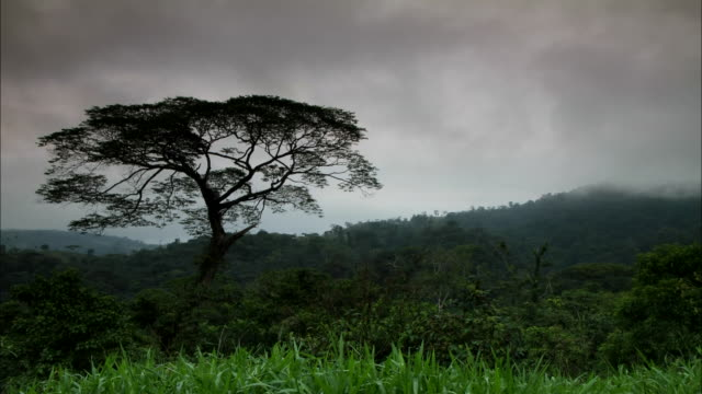 vídeos de stock e filmes b-roll de wide shot, time lapse; swirling clouds over single tree - árvore tropical