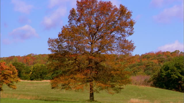 wide shot time lapse tree changing through seasons - le quattro stagioni video stock e b–roll