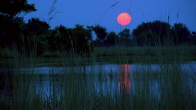 Wide shot tracking shot large full moon over lake / tall rees in foreground / Botswana, Africa