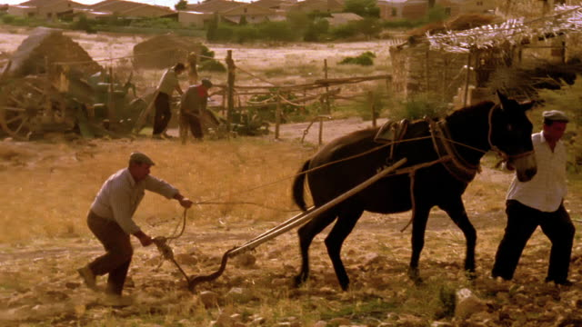 vídeos de stock, filmes e b-roll de wide shot tracking shot two men plowing field with mule while other men work in background / custonaci, sicily - lavrar