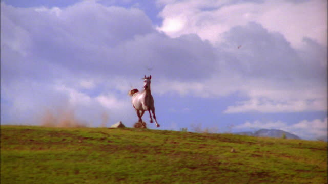 wide shot tracking shot wild horse running - wildtier stock-videos und b-roll-filmmaterial