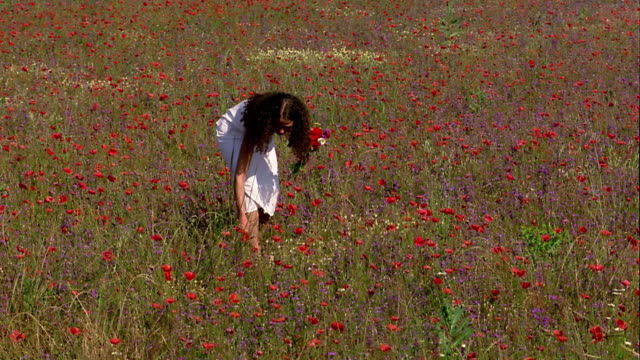vidéos et rushes de wide shot tracking shot young woman wearing white dress, walking through field + picking red flowers / france - robe blanche