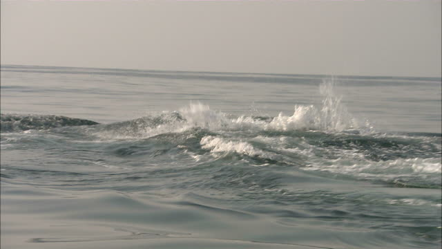 stockvideo's en b-roll-footage met wide shot tracking-left - a whale breeches the surface of the ocean / south africa - rugvin