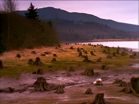 wide shot pan of tree stumps along edge of alder lake (deforestation) / washington - alder tree stock videos & royalty-free footage