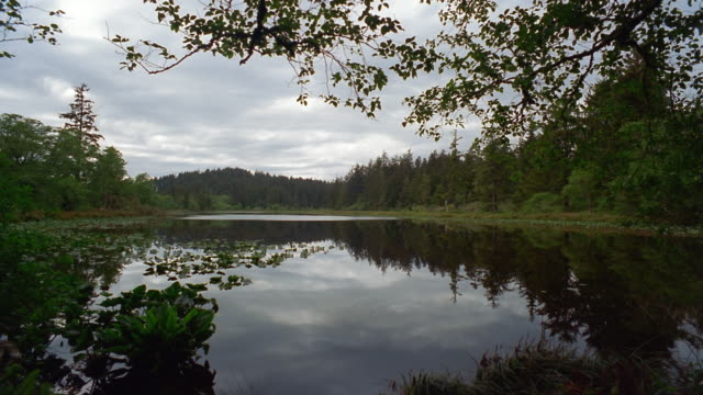 wide shot trees reflecting in lake in fort canby state park on cape disappointment / pacific county, washington, usa - akvatisk organism bildbanksvideor och videomaterial från bakom kulisserna