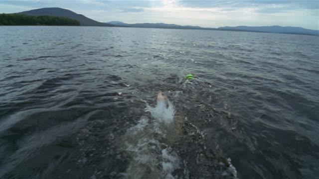 vídeos de stock, filmes e b-roll de wide shot triathlete in wetsuit swimming in lake - triatleta
