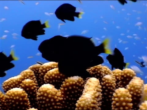 wide shot tropical fish swimming above large coral - invertebrate stock videos and b-roll footage