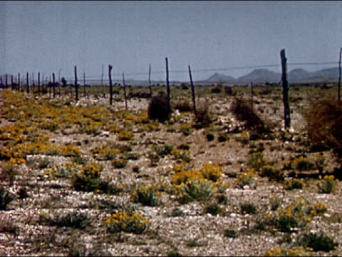 1963 Wide shot tumbleweeds rolling along barbed wire fence/ Texas/ AUDIO