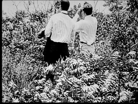 1914 b/w wide shot two lost men looking through binoculars in bushes - 1914 stock videos & royalty-free footage