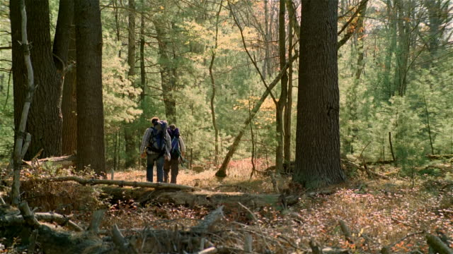 wide shot two men hiking through woods wearing backpacks - ökotourismus stock-videos und b-roll-filmmaterial