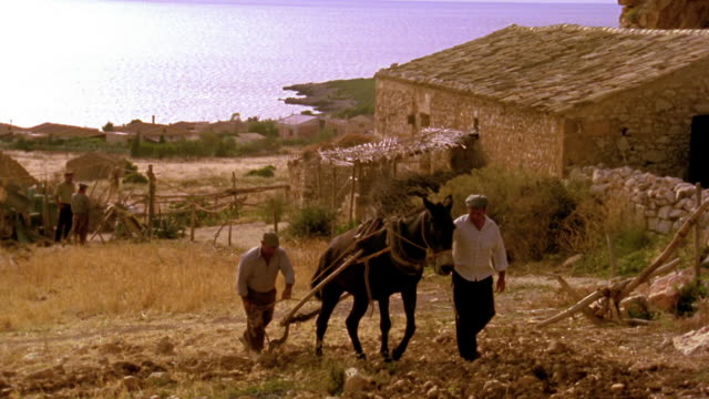 wide shot two men plowing field with mule / water in background / custonaci, sicily - sicily stock videos & royalty-free footage
