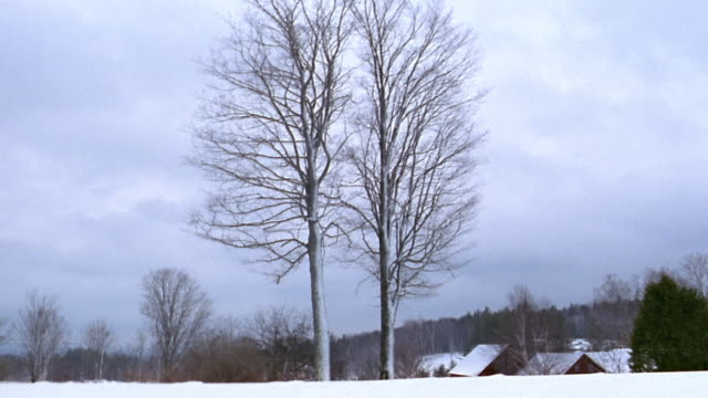 Wide shot two tall bare trees covered w/snow in winter landscape w/roofs and trees in background / Vermont