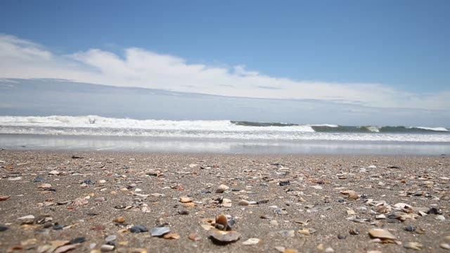 wide shot waves going over sea shells ocean isle beach atmosphere june 20 2013 - akvatisk organism bildbanksvideor och videomaterial från bakom kulisserna