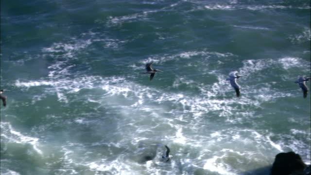 vídeos y material grabado en eventos de stock de wide shot whale surfacing in ocean/ malibu, california - salir del agua