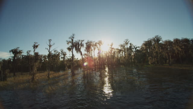 Wide shot with blue water in the foreground and sun refracting through a swampy grove of cypress trees.