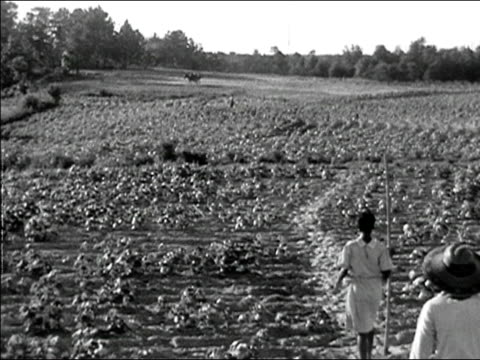 1942 wide shot woman and girl walking out into field with horses off in distance/ macon, georgia/ audio - georgia stati uniti meridionali video stock e b–roll