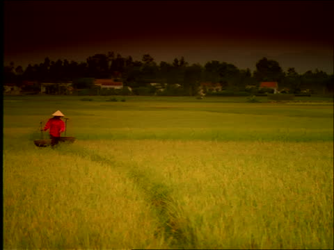 wide shot PAN woman carries baskets on yoke thru field / Vietnam / Filter