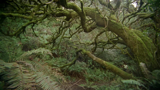 wide shot woman running up hill on forest trail beneath large tree/ california - only mature women stock videos & royalty-free footage