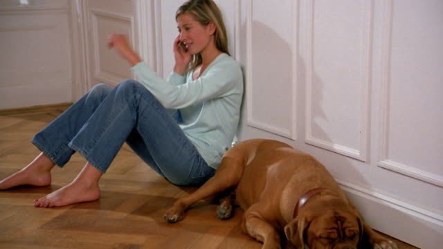 Wide shot woman sitting on floor w/dog and talking on cellular phone / petting dog / Brussels, Belgium