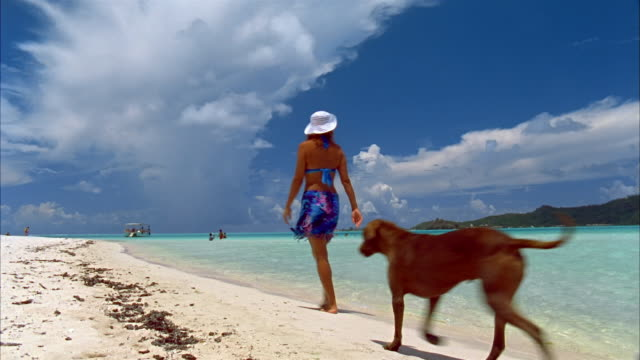 wide shot woman walking past and away from camera along beach with dog under clear blue sky/ bora bora - bora bora stock videos and b-roll footage