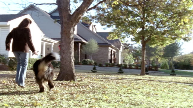 stockvideo's en b-roll-footage met wide shot woman with chew toy playing with bernese mountain dog in front yard - alleen één mid volwassen vrouw