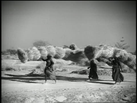 1932 wide shot women carrying large sheaves of hay on their heads