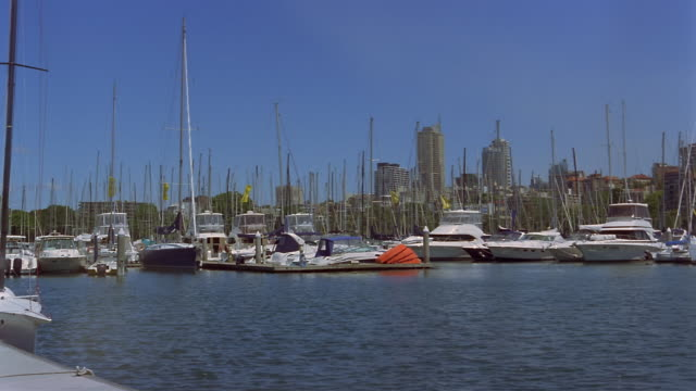 Wide shot yachts moored in Rushcutters Bay with skyline in background/ Sydney, Australia