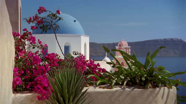 Wide shot zoom out bougainvillea flowers with blue-domed church in background in the village of Ia / Santorini, Greece