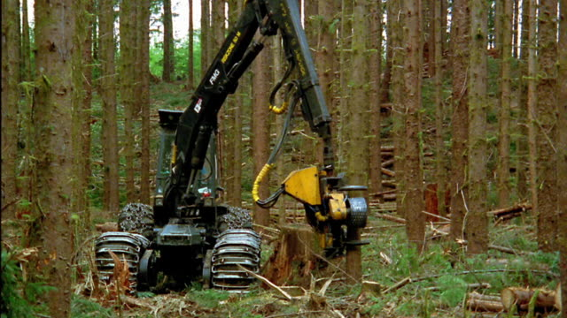 wide shot zoom out logging vehicle cutting down tree and stripping it in forest / olympic peninsula, washington - industria forestale video stock e b–roll