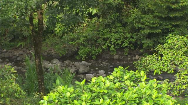 vídeos de stock e filmes b-roll de wide shot, zoom out; rainforest establisher     - árvore tropical