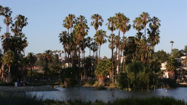 stockvideo's en b-roll-footage met wide shots of palm trees standing around the lake in echo park in los angeles california on july 13th 2015 shots wide shots of trees standing tall... - hollywood californië