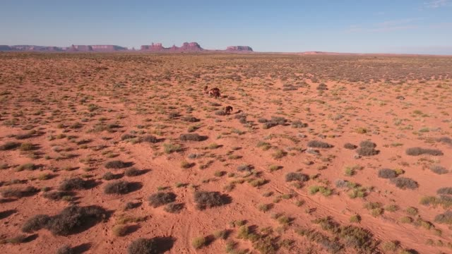 wide side tracking wild horses, drone aerial 4k, monument valley, valley of the gods, desert, cowboy, desolate, mustang, range, utah, nevada, arizona, gallup, paint horse .mov - paint horse stock videos & royalty-free footage