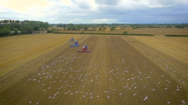 wide slow motion aerial footage of tractors ploughing and birds flying - gabbiano video stock e b–roll