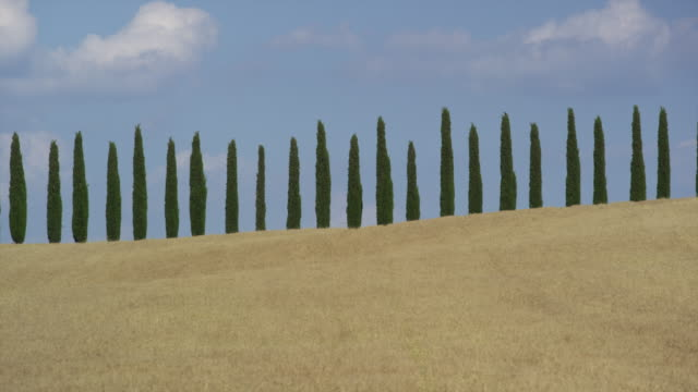 wide slow motion panning shot of line of trees against blue sky in rural landscape / val d'orcia, tuscany, italy - tuscany stock videos and b-roll footage