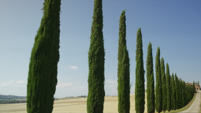 Wide slow motion panning shot of tree lined street leading to hilltop house in rural landscape / Val d'Orcia, Tuscany, Italy