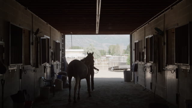 wide slow motion shot of girl leading horse from stable / lehi, utah, united states - lehi stock videos & royalty-free footage