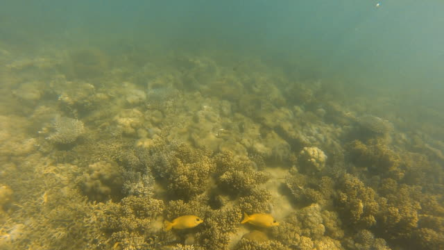 Wide view of coral reefs underwater