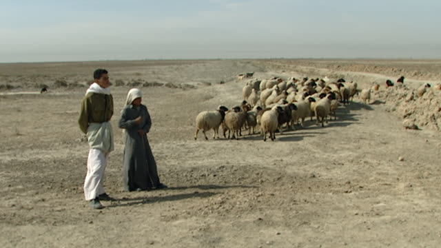 wide view of two young iraqi shepherds standing next to their flock of sheep. the sheep are grazing near a roadside in the desert. - 羊飼い点の映像素材/bロール