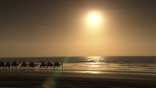 wide view sunset silhouette of a camel train travelling along the white sanded beach with people on the camels backs ocean in the background soft... - camel train stock videos & royalty-free footage